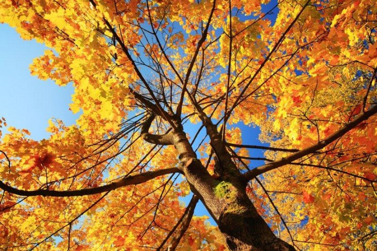 In memory image of autumn tree