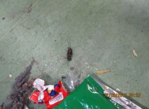 Inspectors found this cockroach among the litter in Liverpool prison